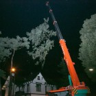 Kappen grote boom